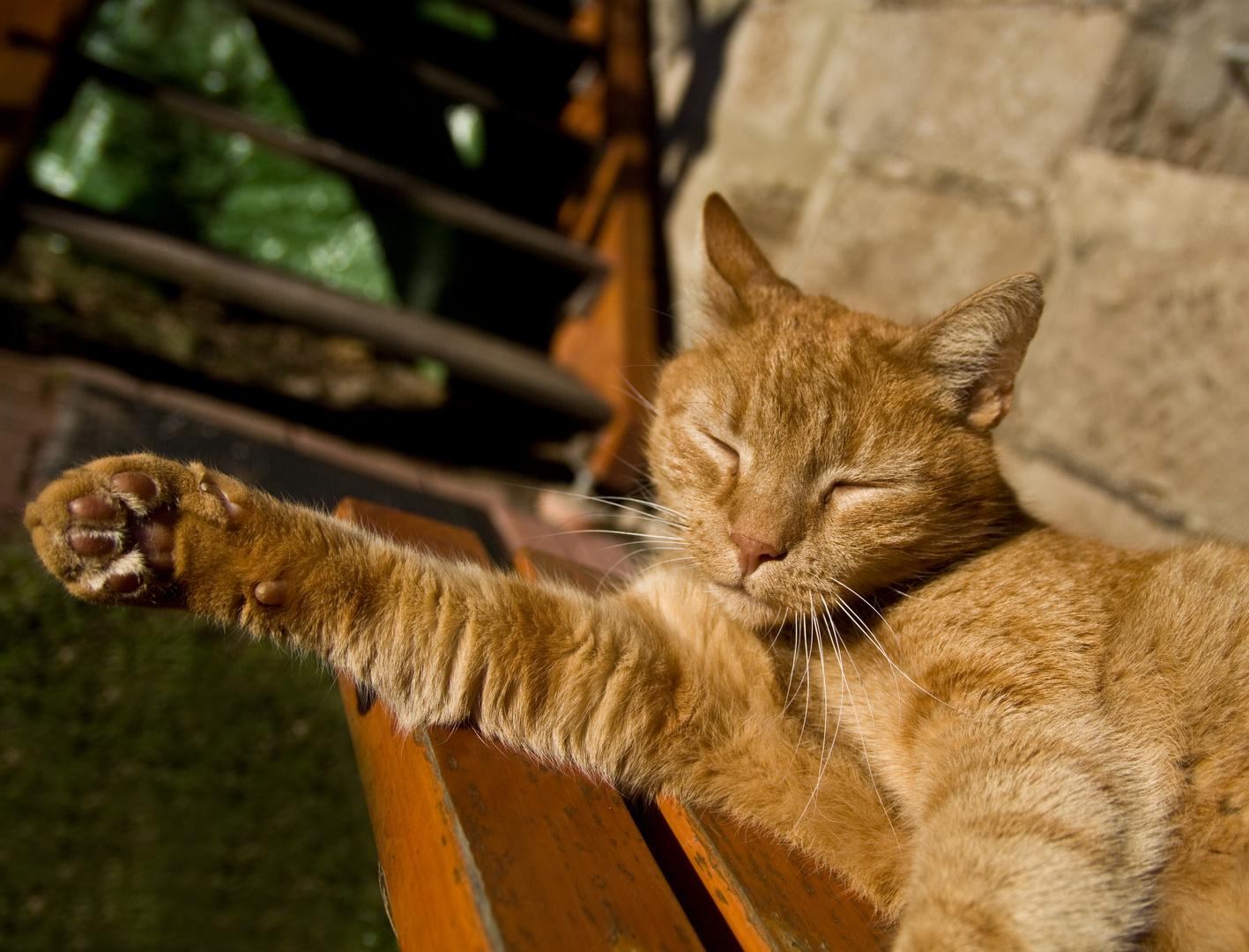 cat like sun