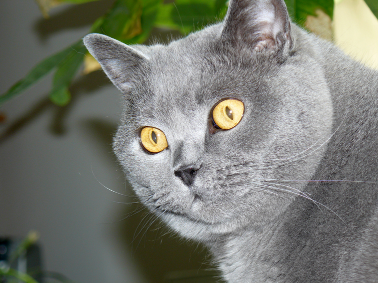 """""""Cat-Model"""" Leon"""