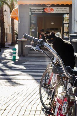 cat on bike