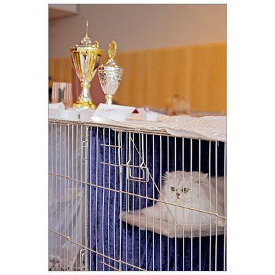 Cat Show #4: Hinter Gittern