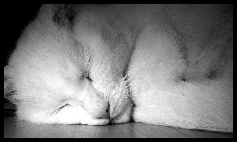 cat.... sleep....