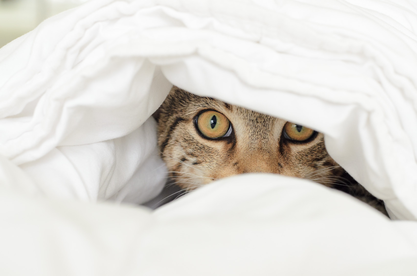 Cat Tobi...