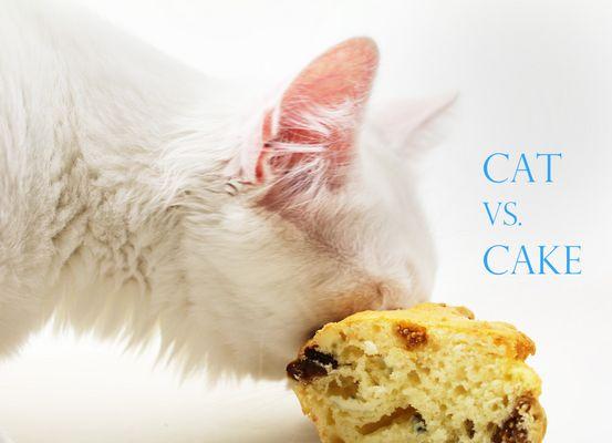 Cat vs. Cake I