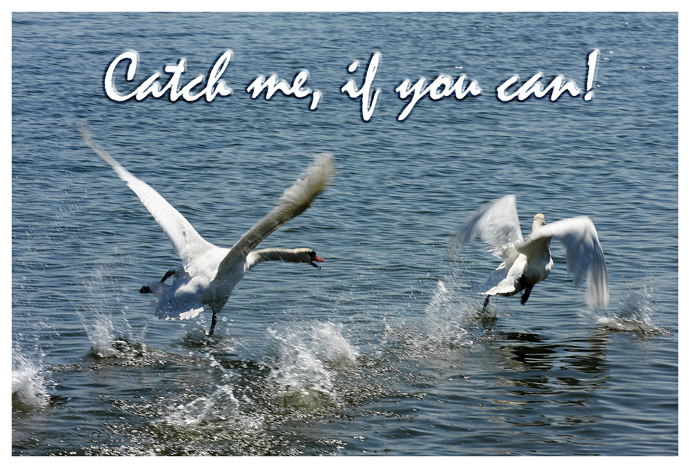 Catch me, if you can!