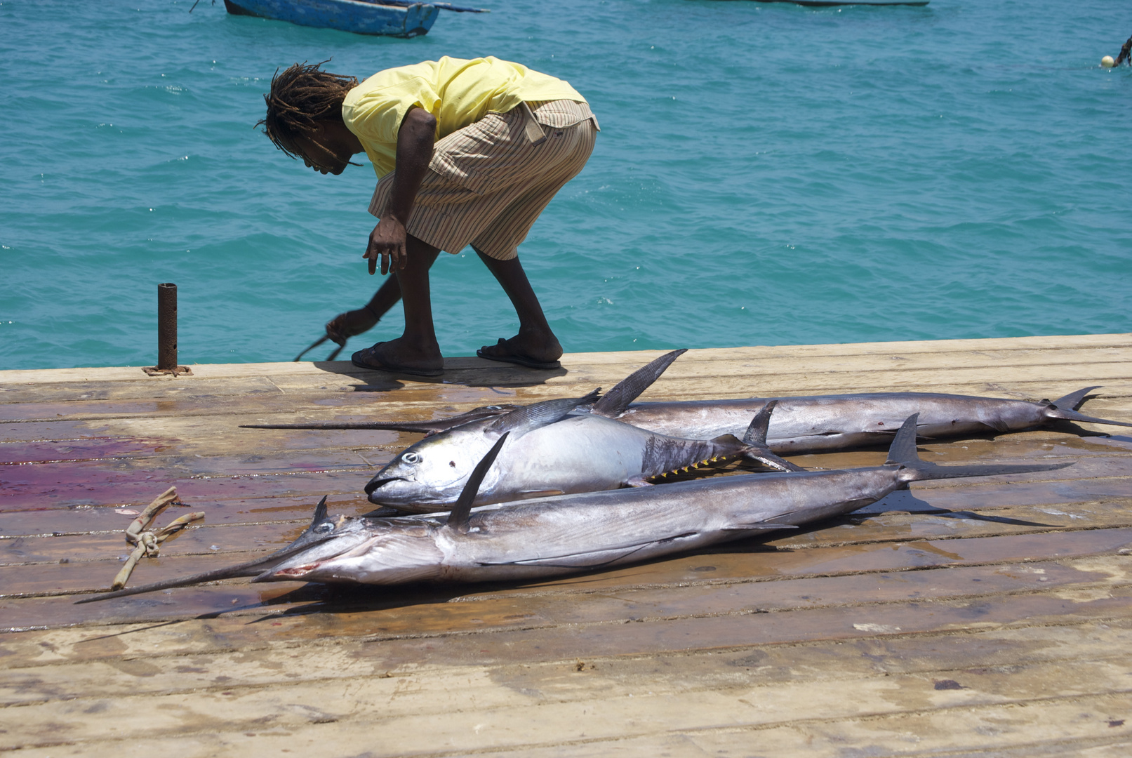 Catch of the day. Cape Verde, 2011