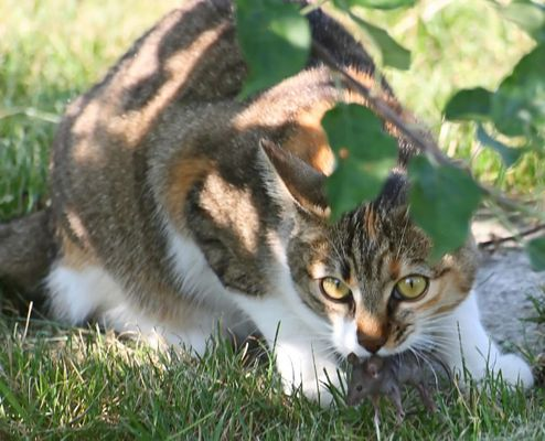 CAT'ched mouse
