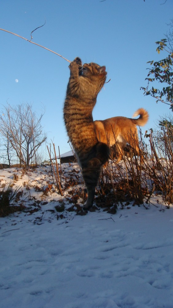 Catdog?!