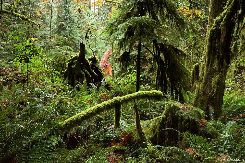 Cathedral Grove 1