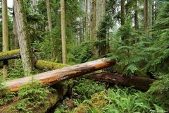 Cathedral Grove 2