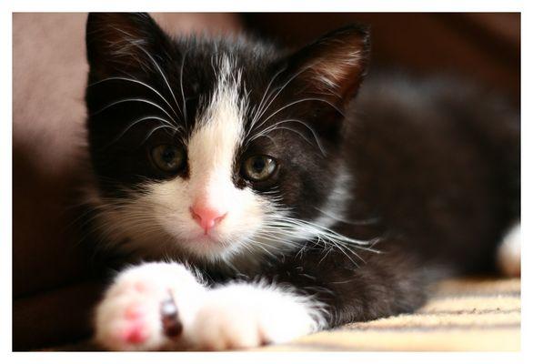 *CatPosing*