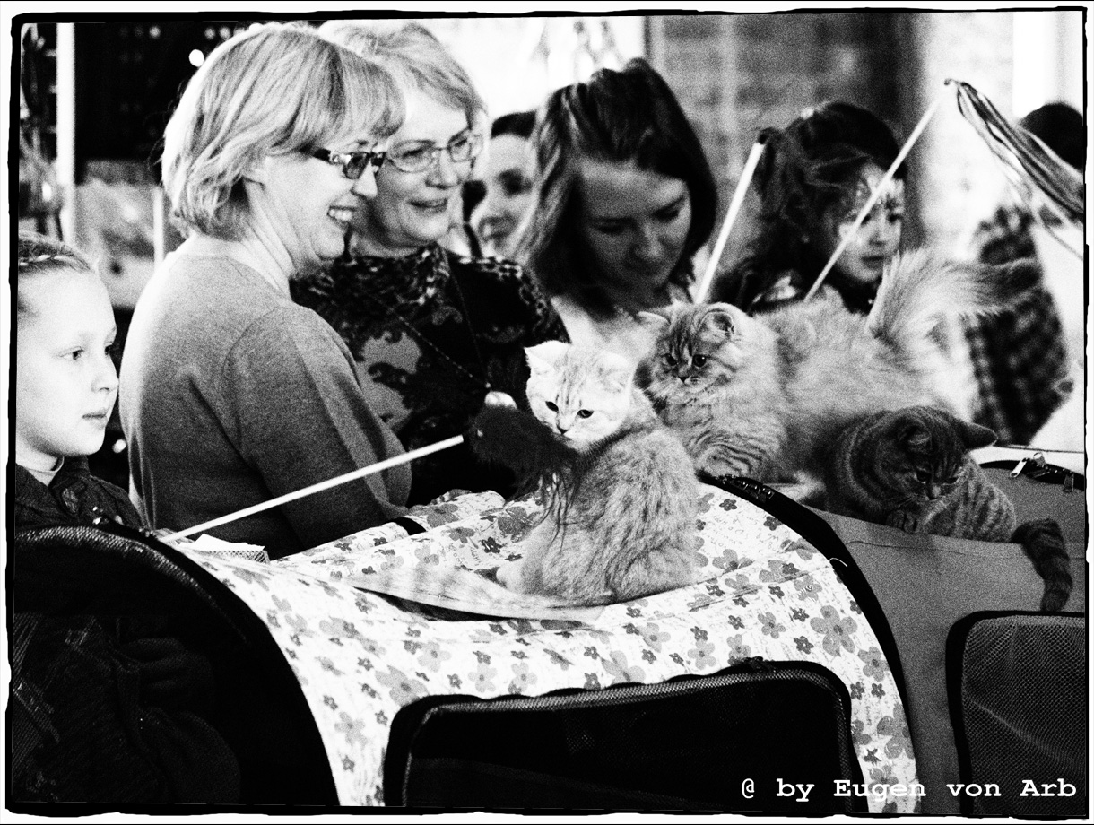 Cats exhibition in St. Petersburg, Russia