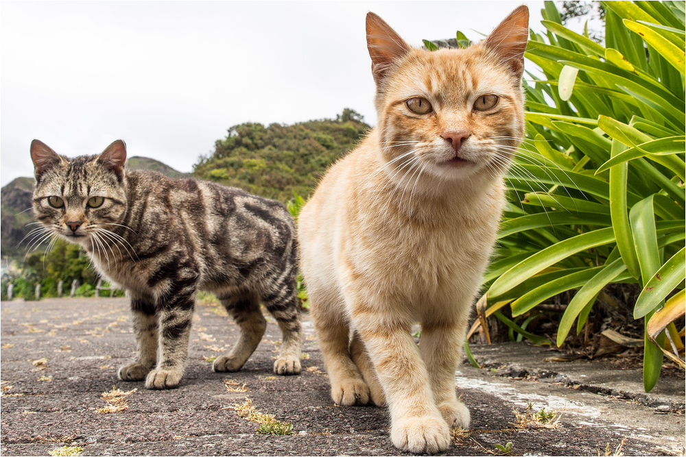 Cats from Madeira #1