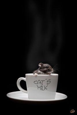 Cat´s Milk