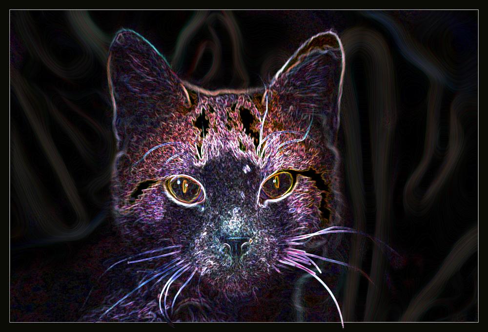Cats oder Zauber der Verfremdung