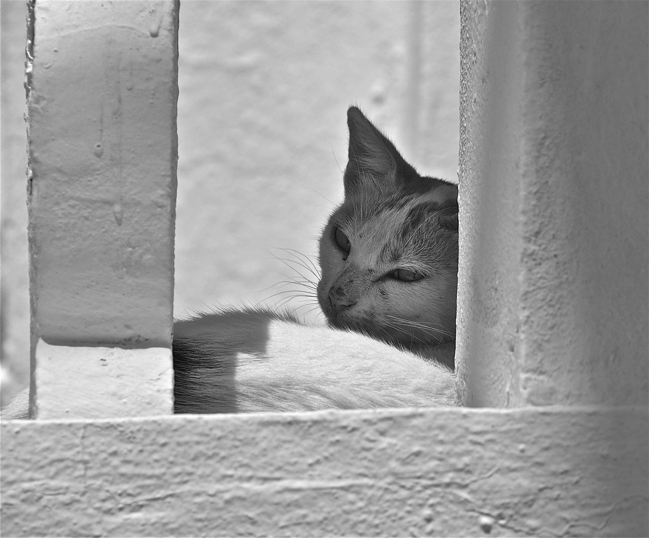cats of karpathos