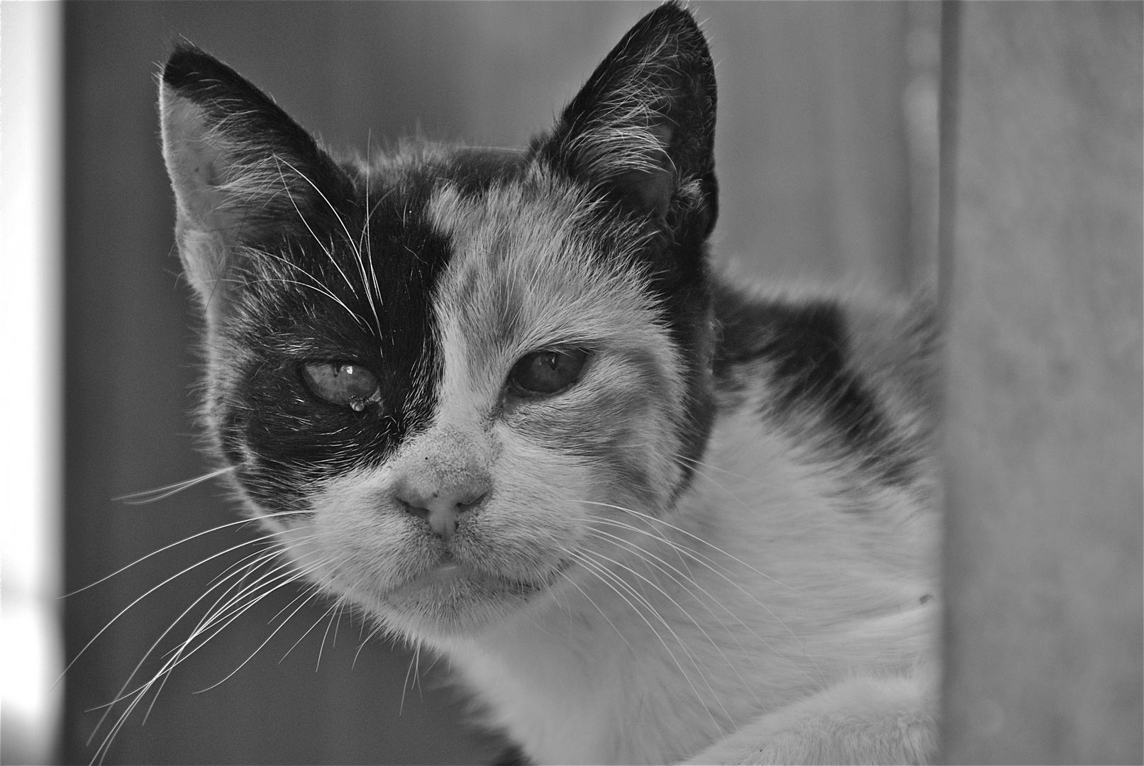 cats of karpathos II