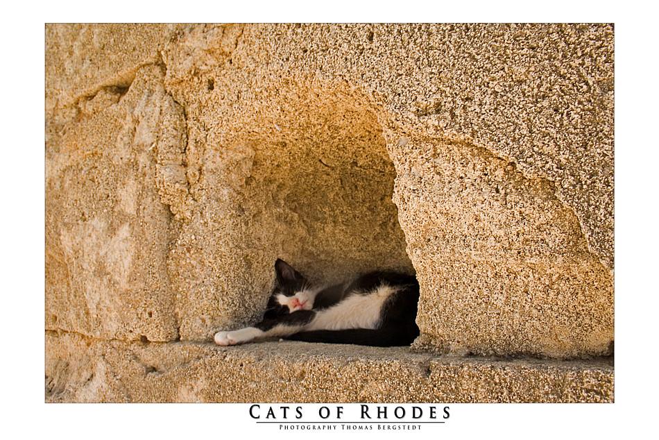 Cats of Rhodes No. 1
