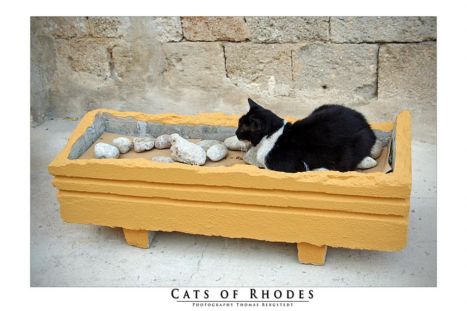 Cats of Rhodes No. 2