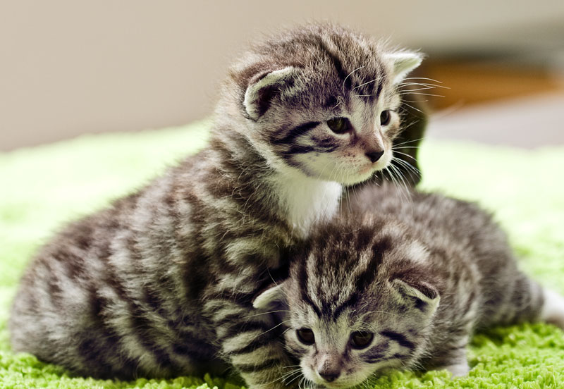 cats05