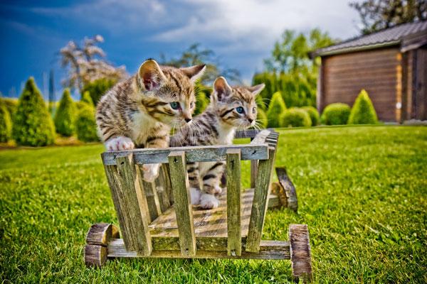 cats06