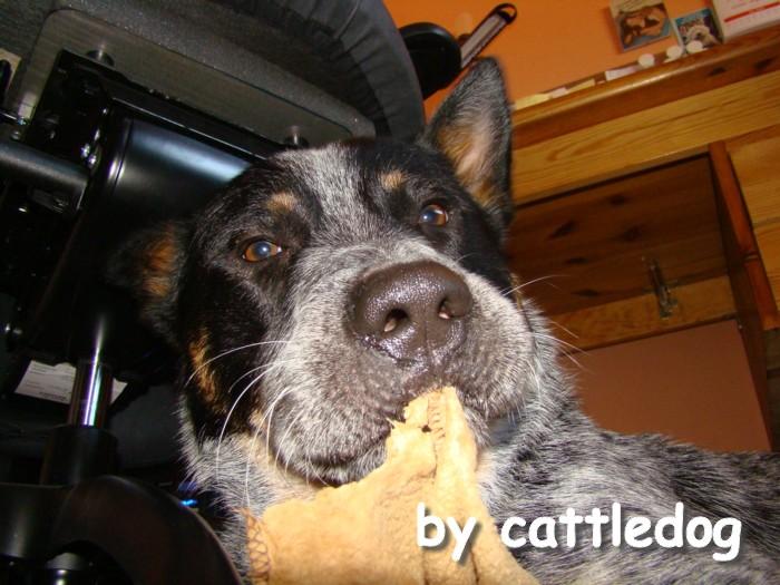 cattledog Sky - die decke