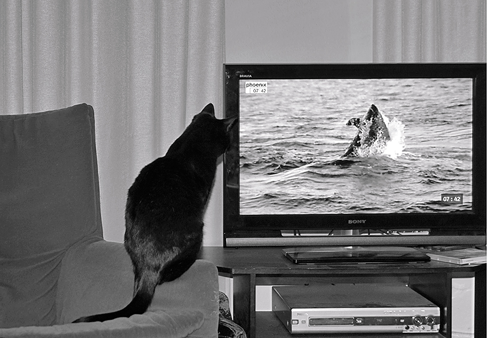 CAT_TV