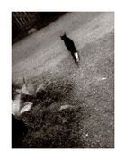 catwalk (1)