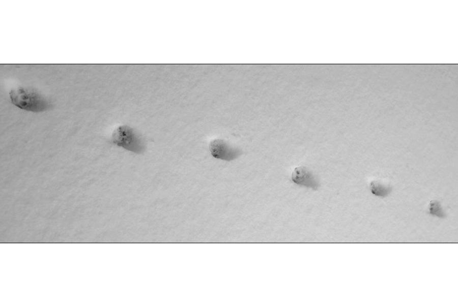 catwalk foto bild tiere spuren von tieren natur bilder auf fotocommunity. Black Bedroom Furniture Sets. Home Design Ideas