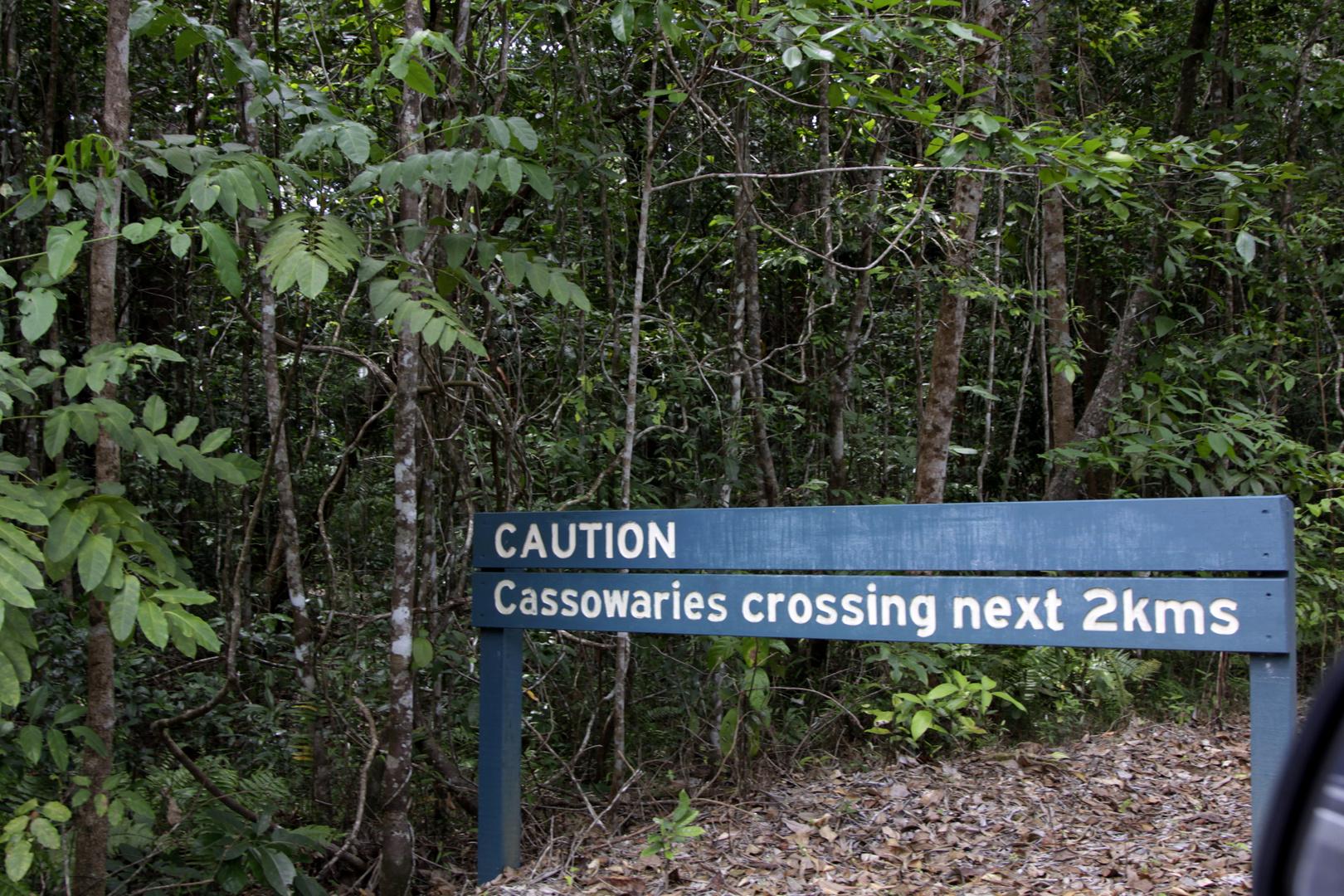 caution cassowaries crossing