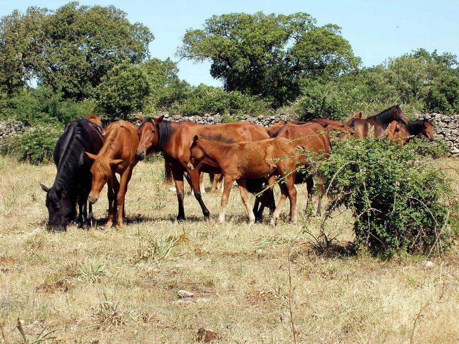 Cavalli del Sarcidano