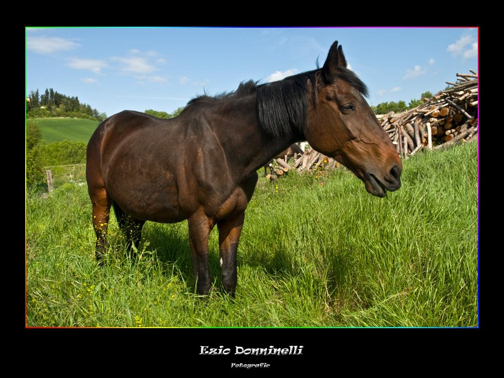 Cavalli in libertà 2