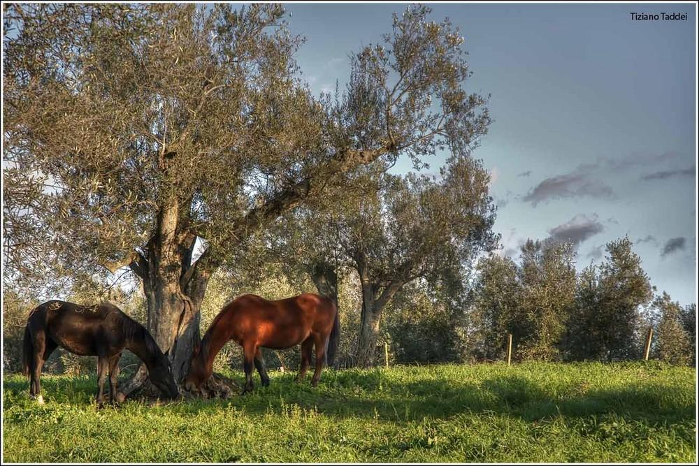 Cavalli innamorati............