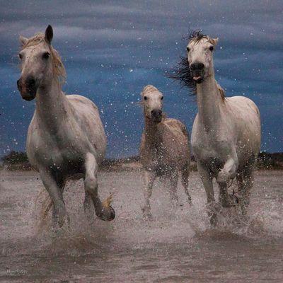 cavalli nella tempesta