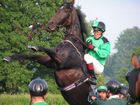 Cavalli rampante