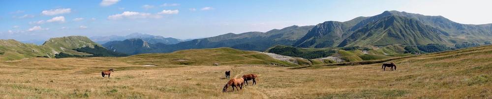 cavalli sul Monte Cusna-App.no Reggiano