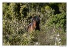 Cavallo della Jara