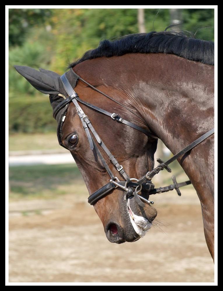 Cavallo in lavoro 2