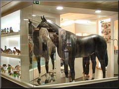 Cavallo in vetrine
