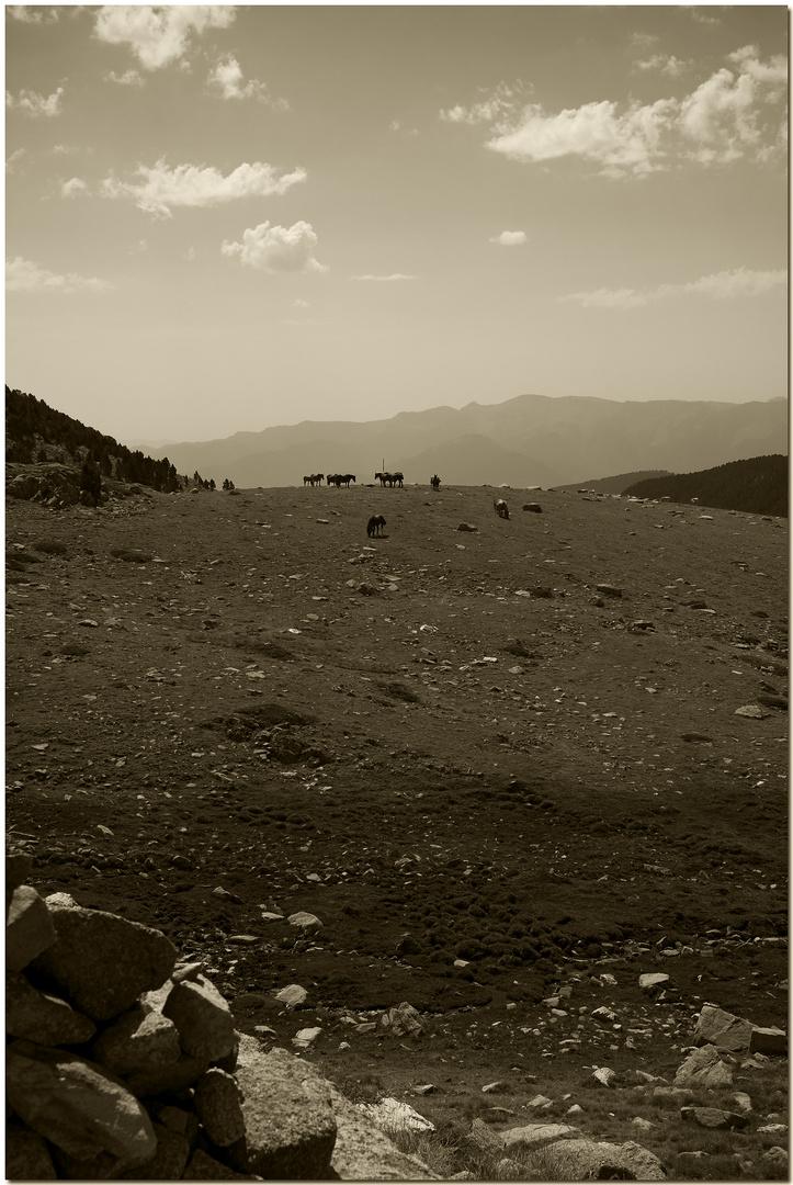 Cavalls a l'horitzó