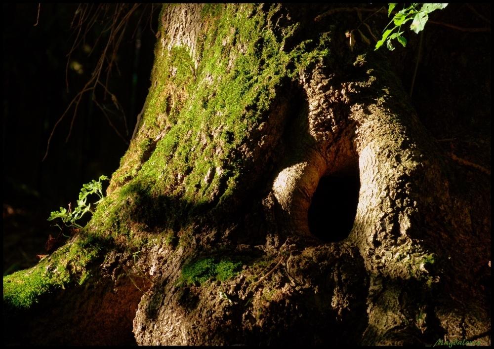 Caverne boisée