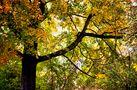 Habt ein angenehmes Herbstwochenende von SINA
