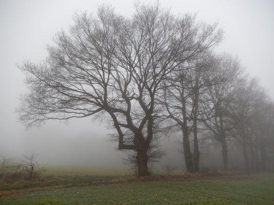 ce matin en Picardie