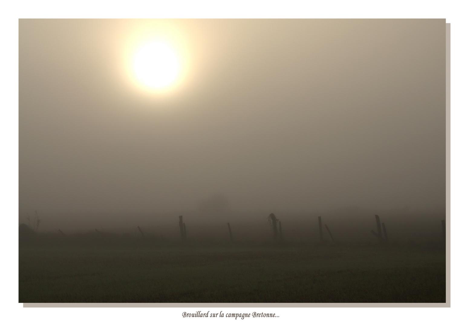 Ce matin le brouillard...