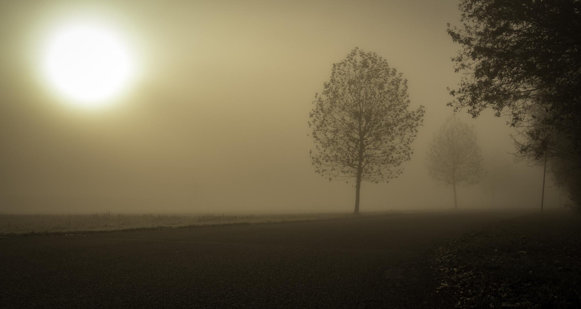 Ce matin, près de Strasbourg...
