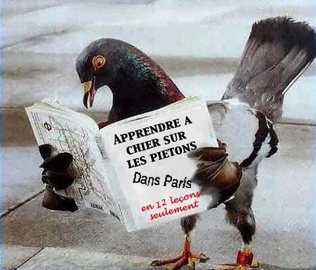 Ce pigeon n'a plus qu'un oeil ! Mais il s'en sert !