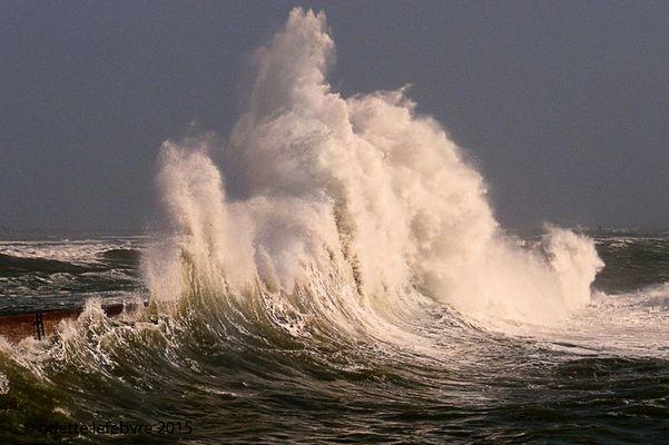 Ce que la mer nous offre