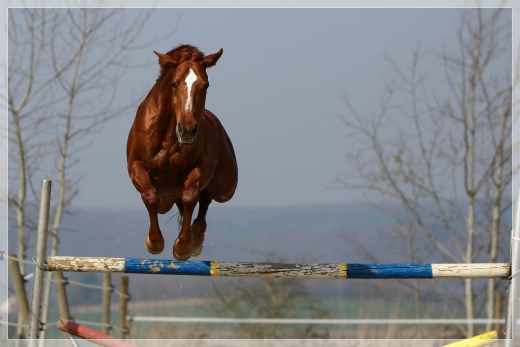 Cehra beim freien Springen