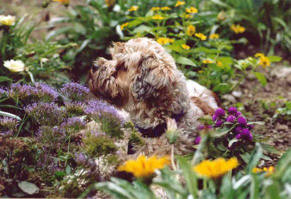 Celia im Blumenbeet
