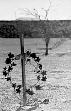 Cementerio en el norte grande
