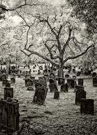 """""""Cemetery"""""""